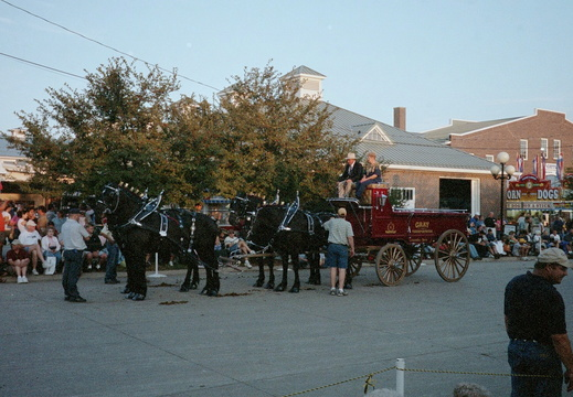 Draft horse hitch
